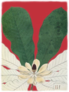 SIEBOLD'S FLORILEGIUM OF JAPANESE PLANTS 1994